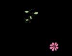 Flor.W