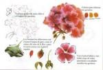 Pintando Flores.3